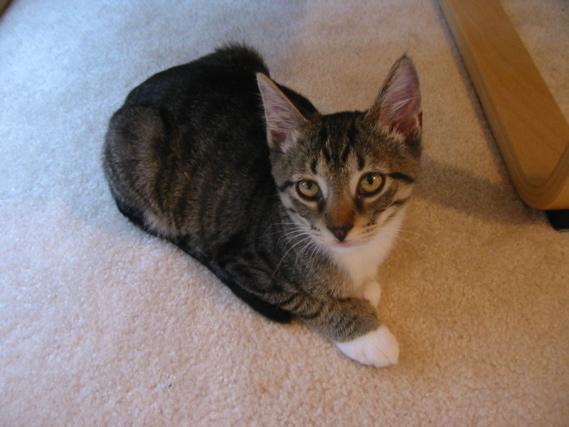 Zora, ~4 months old